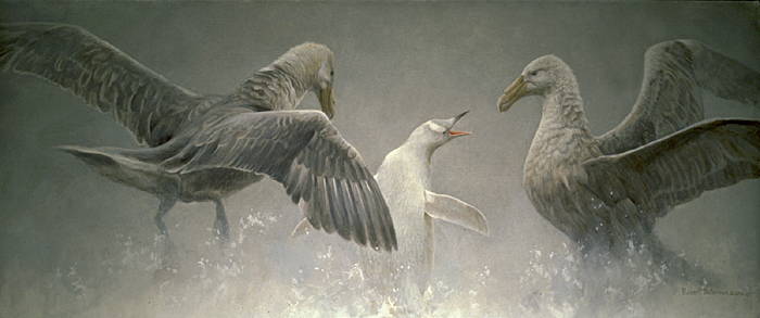 Robert Bateman Giant Petrels and Albino Gentoo Penguin Original Painting