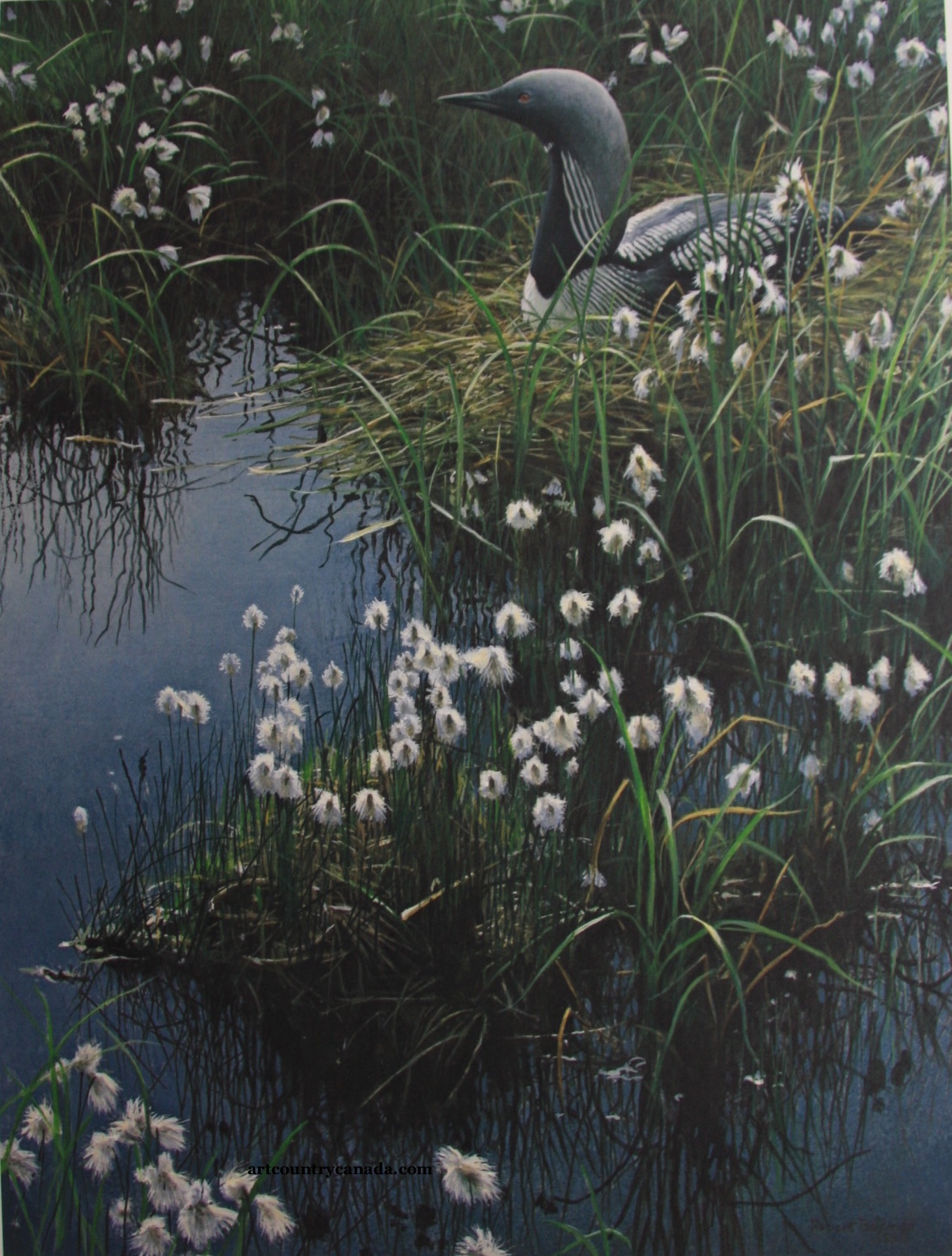 Robert Bateman Arctic Loon and Cottongrass
