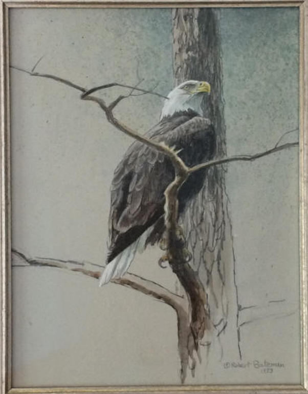Robert Bateman Bald Eagle