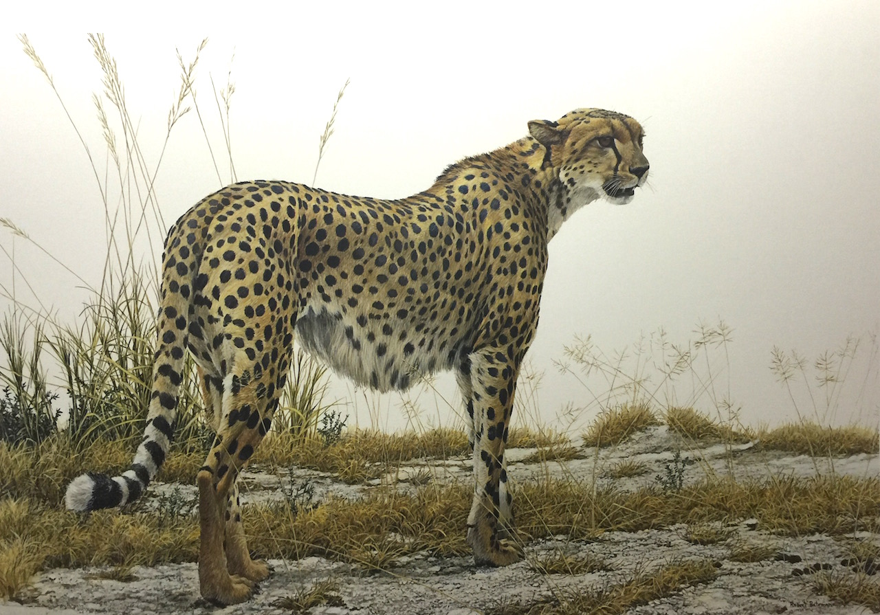 Robert Bateman Cheetah Profile