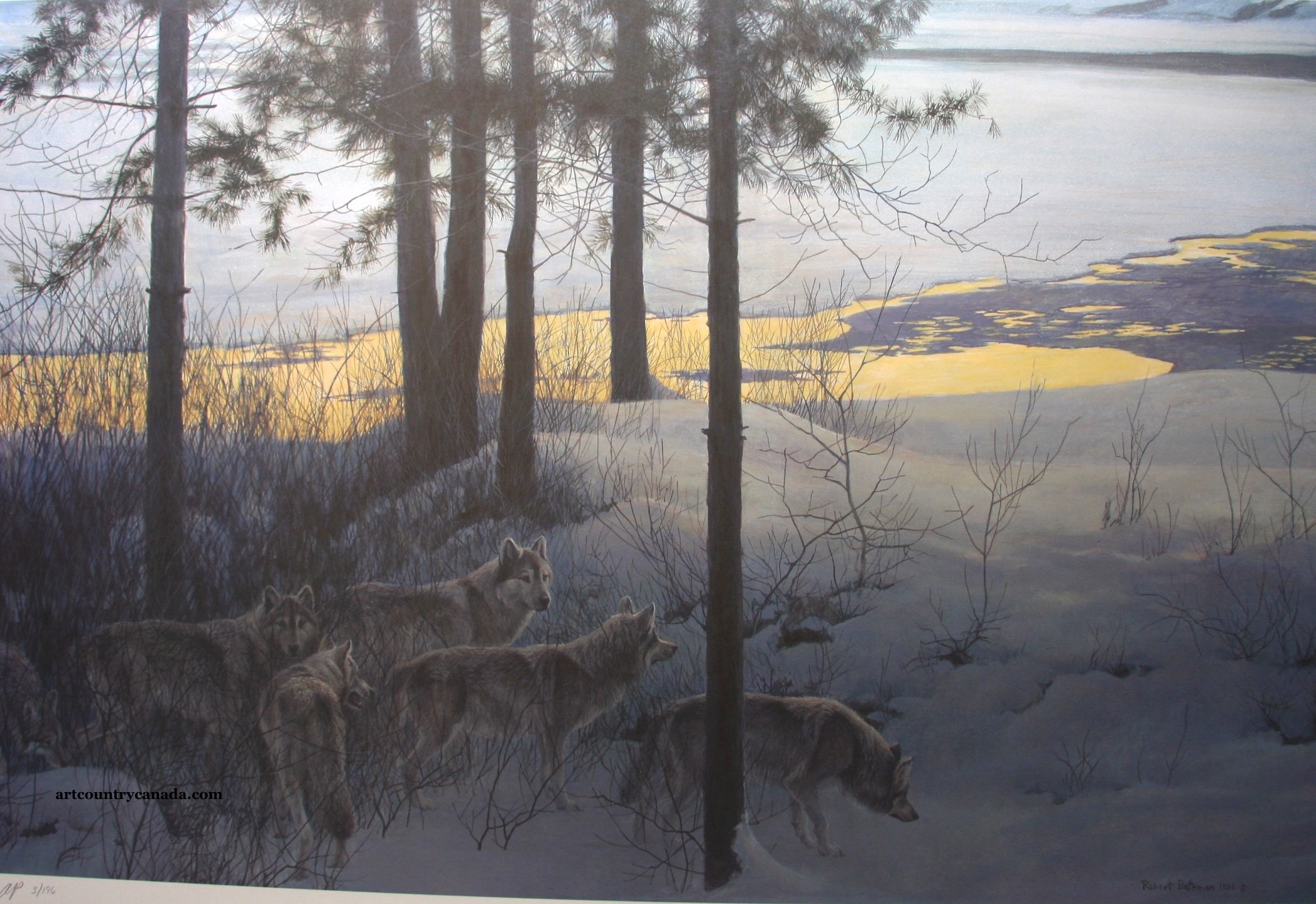 Robert Bateman Edge of Night Timberwolves