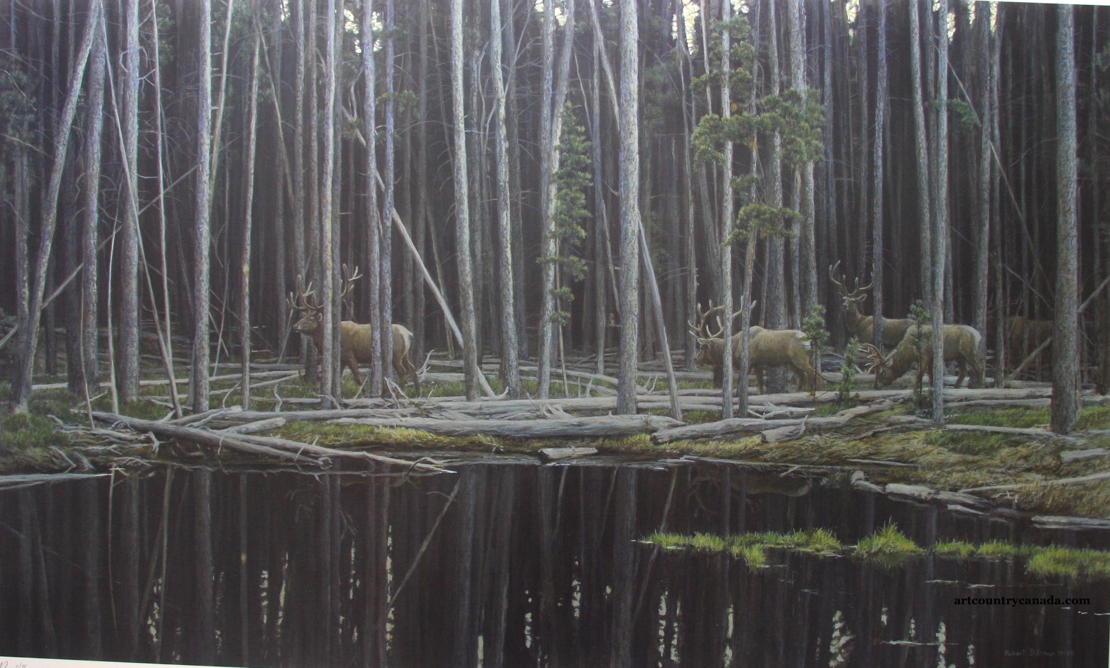 Robert Bateman Elk at Yellowstone