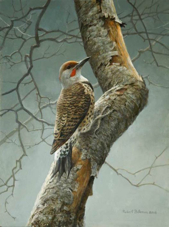 Robert Bateman Flicker in Apple Tree
