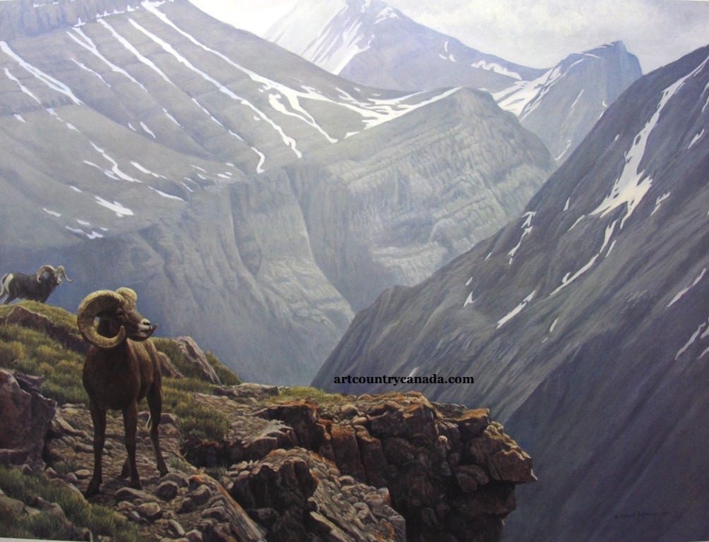 Robert Bateman High Country Stone Sheep