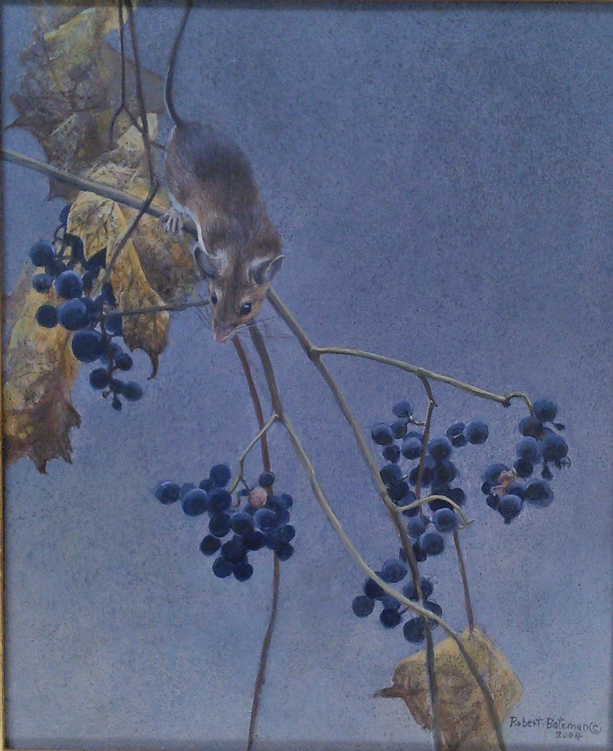 Robert Bateman Mouse and Grapes