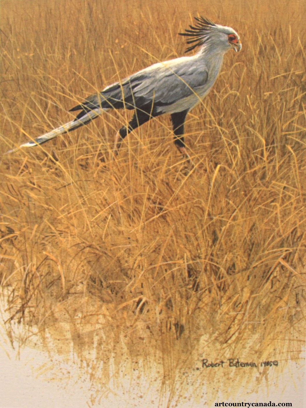 Robert Bateman Secreetary Bird