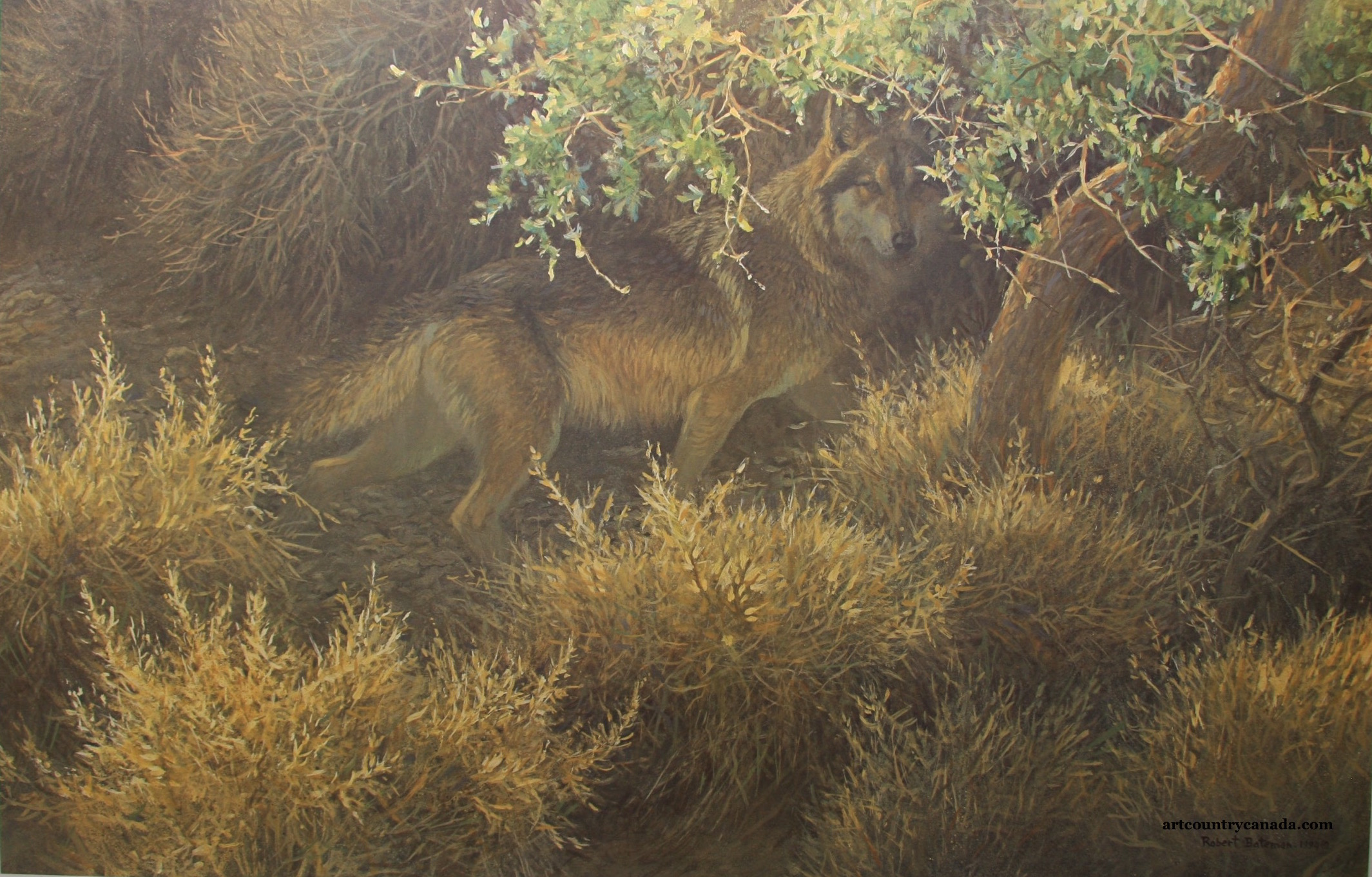 Robert Bateman Sierra Evening Mexican Wolf