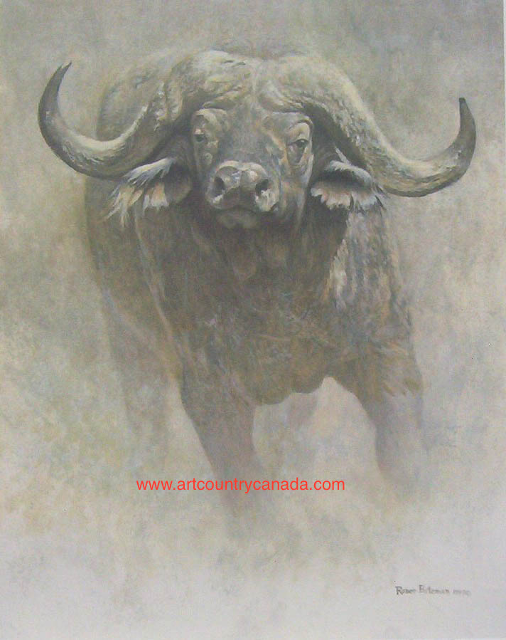 Robert Bateman African Buffalo Sappi Foundation
