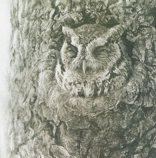 Robert Bateman Screech Owl And Apple Tree