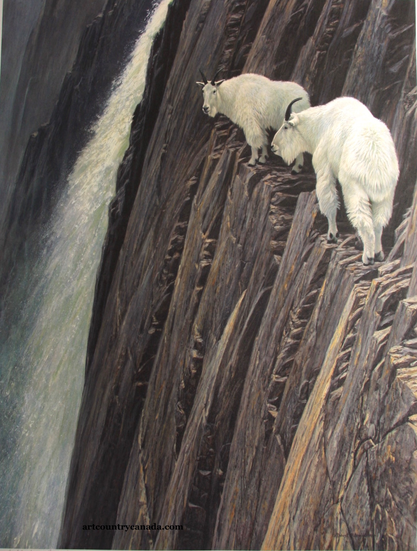 Robert Bateman Sheer Drop Mountain Goats