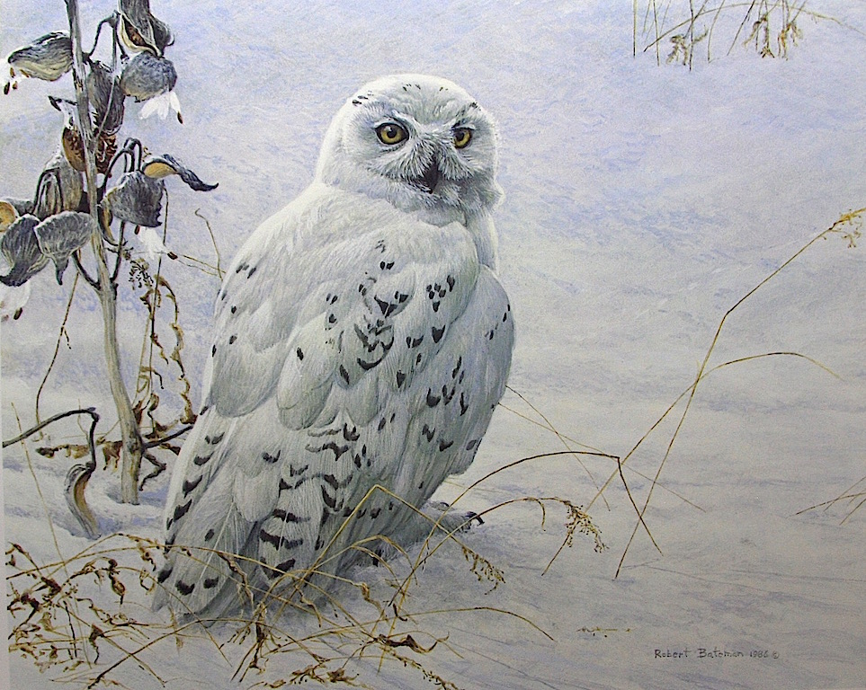 Robert Bateman Snowy Owl and Milkweed t
