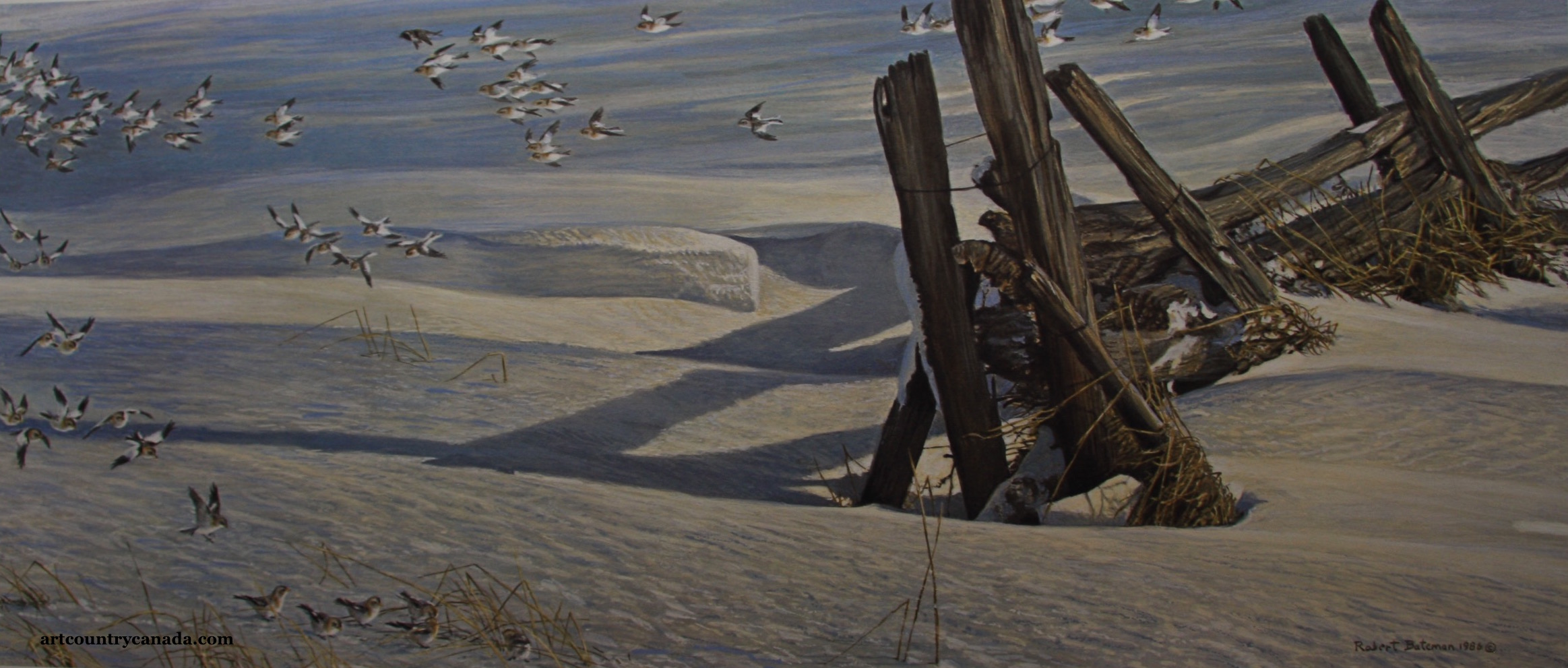 Robert Bateman Split Rail Snow Buntings