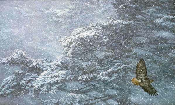 Robert Bateman Sudden Blizzard Red-Tailed Hawk