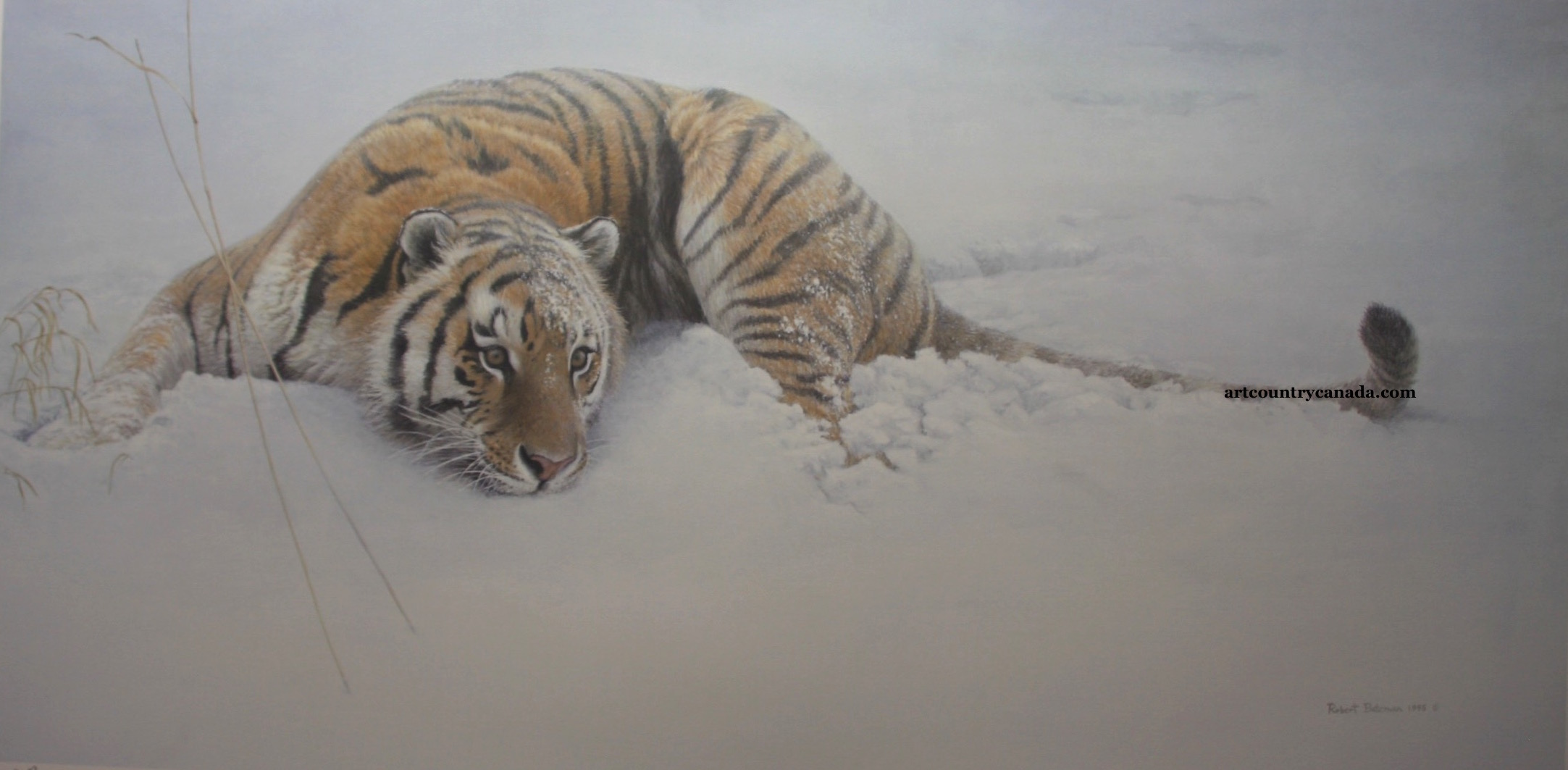 Robert Bateman Sudden Move Tiger