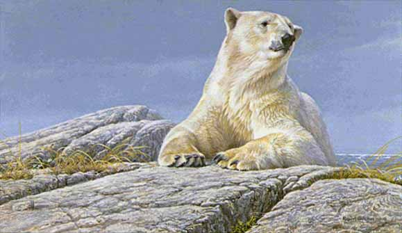 Robert Bateman Summertime Polar Bear