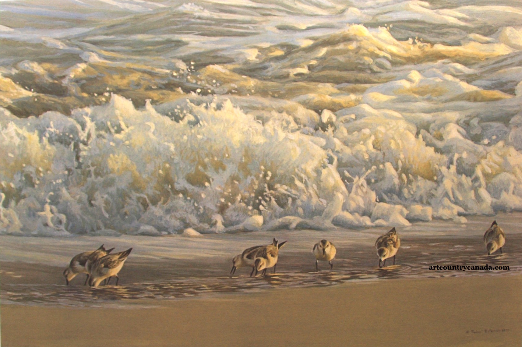 Robert Bateman Surf and Sanderlings