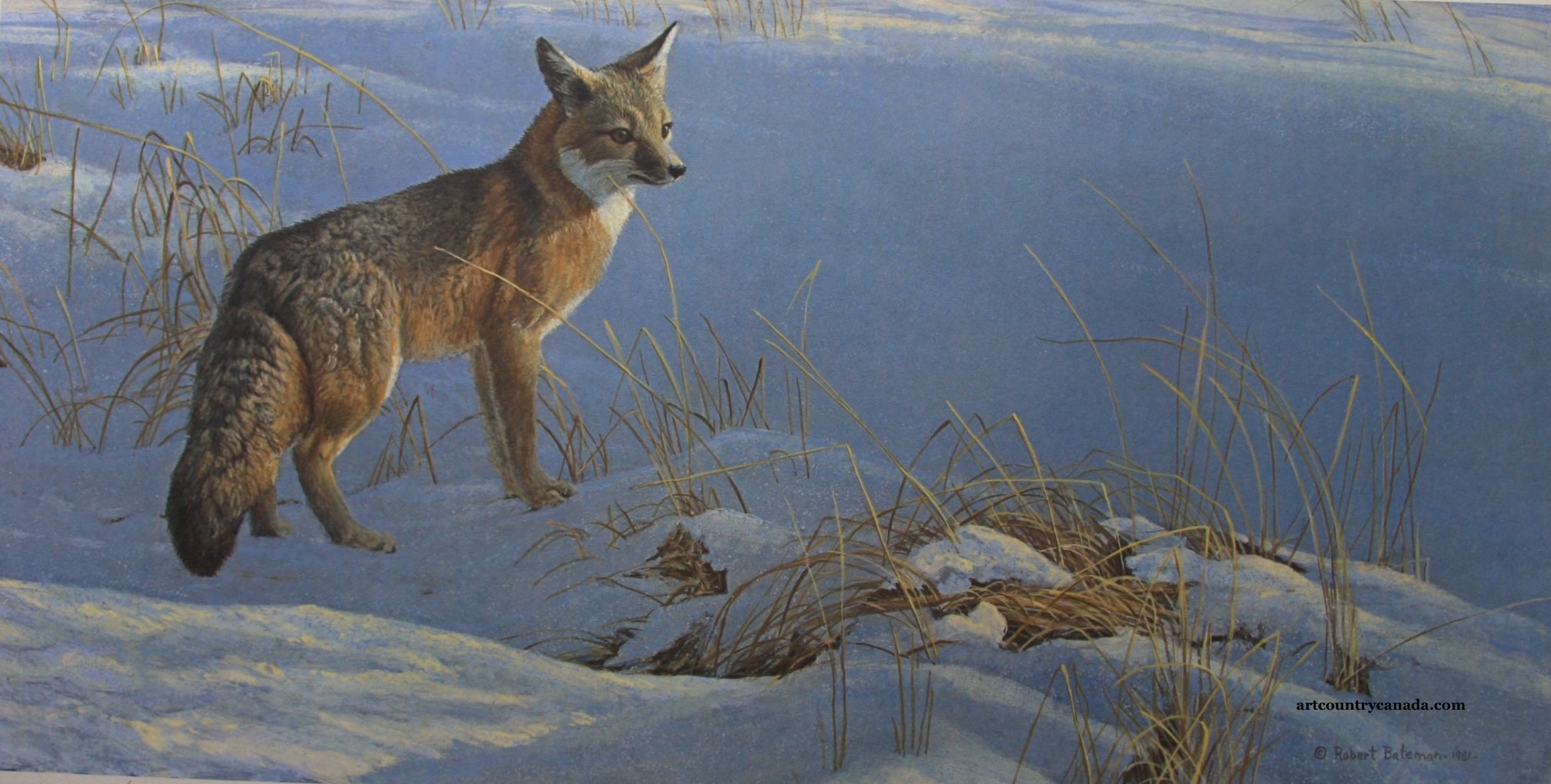 Robert Bateman Swift Fox