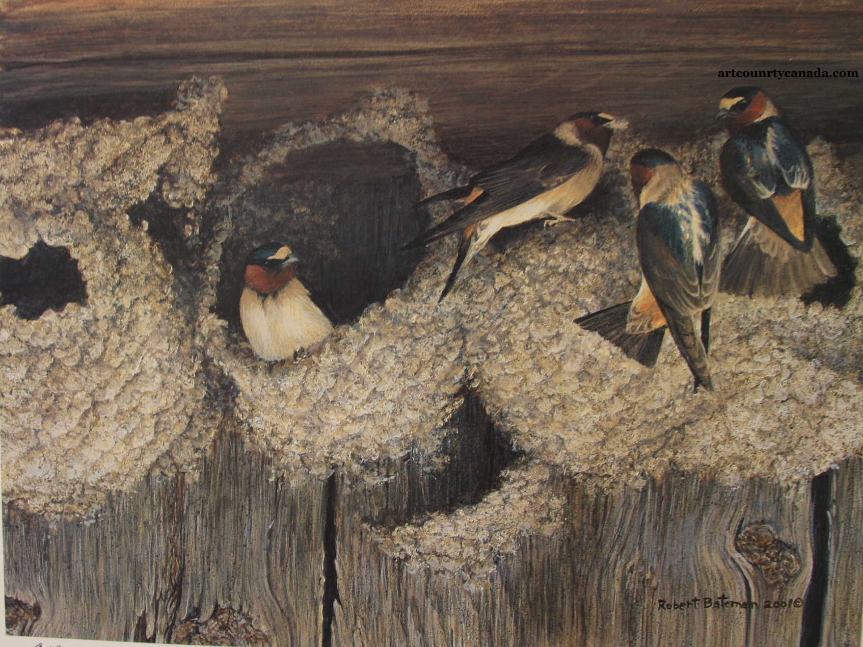 Robert Bateman Under Construction Cliff Swallows