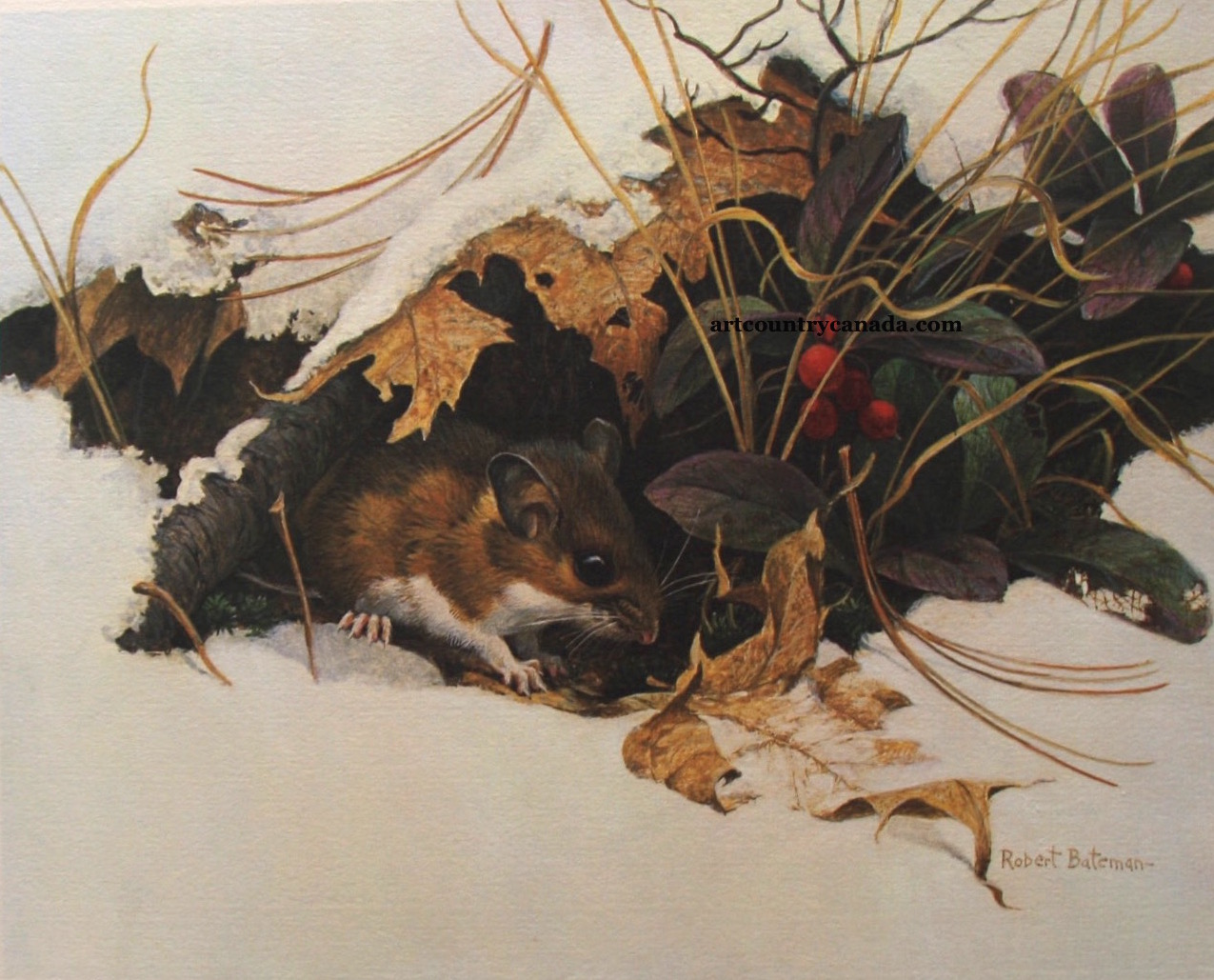 Robert Bateman White Footed Mouse in Wintergreen