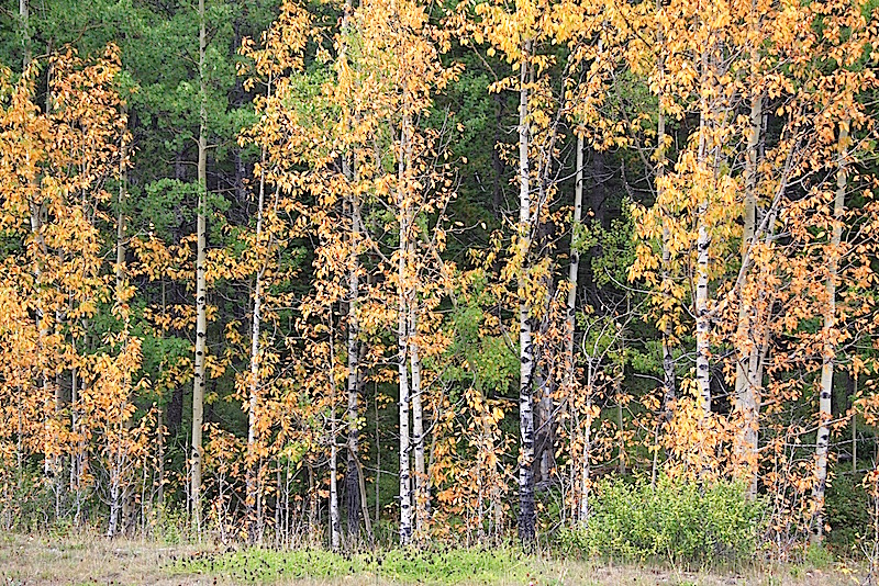 Bragg Creek Colors