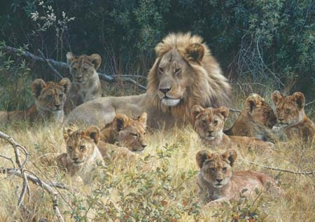 Carl Brenders The Babysitter Male Lion