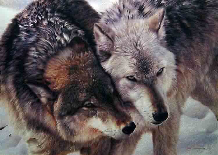 Carl Brenders Cheek To Cheek Wolves
