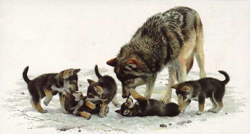 Wolf Family Toy : Art country canada carl brenders den mother wolf family
