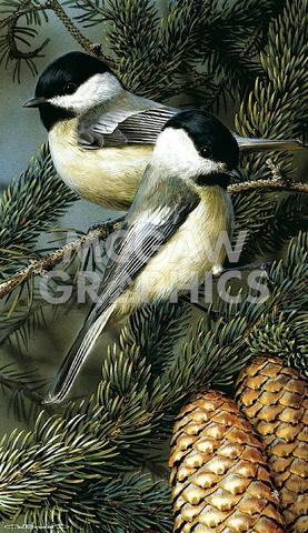 Carl Brenders Black Capped Chickadees