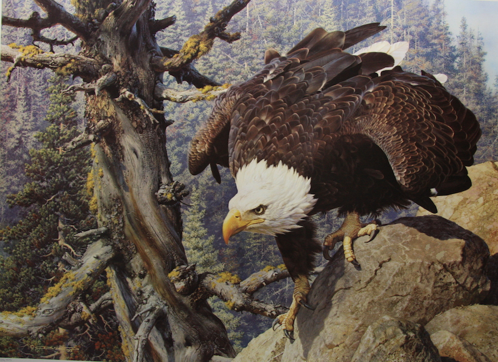 Carl Brenders Monarch is Alive Bald Eagle