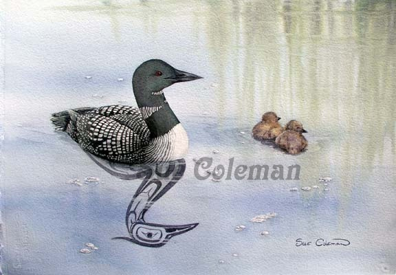 Sue Coleman Loon and Chick