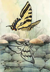 Sue Coleman Butterfly Reflection