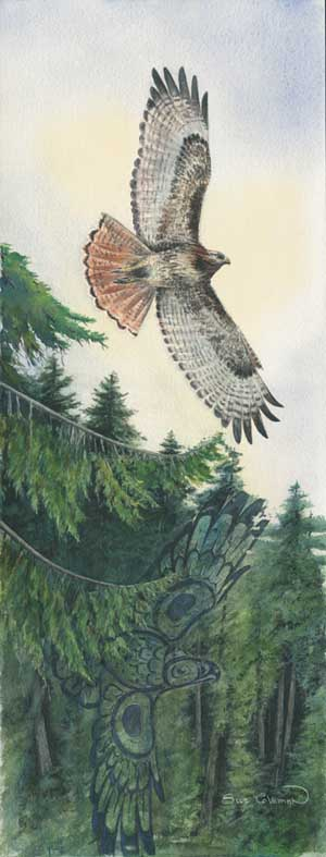 Sue Coleman Red-Tailed Hawk