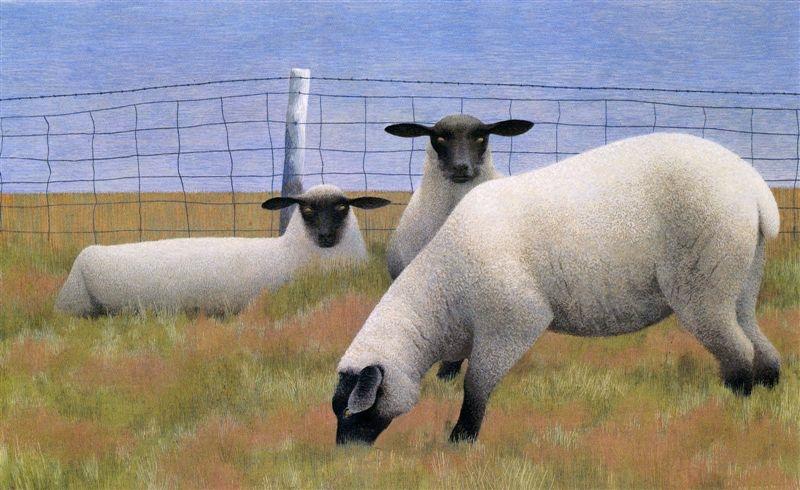 Three sheep - photo#9