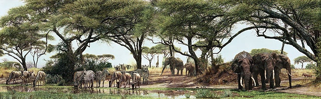 Simon Combes African Oasis