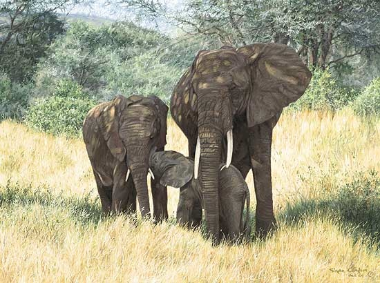 Simon Combes Family Ties Elephant
