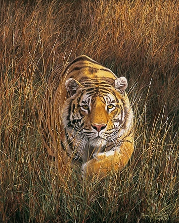 Simon Combes Fearful Symmetry Tiger
