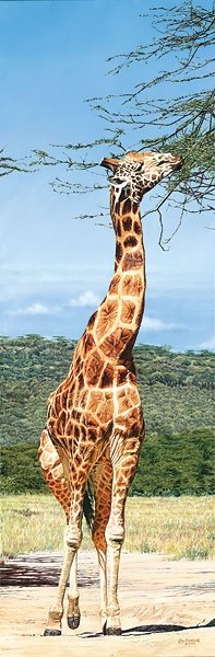 Guy Combes Rothschild Giraffe