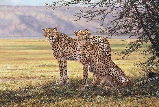 Simon Combes Imminent Pursuit Cheetah