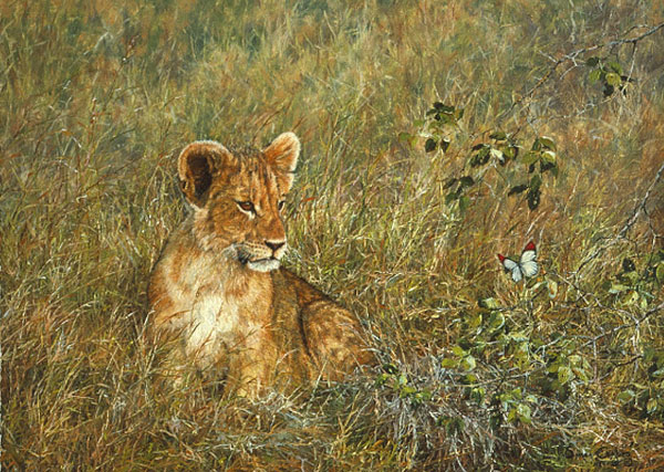 Simon Combes Lion Cub and Butterfly