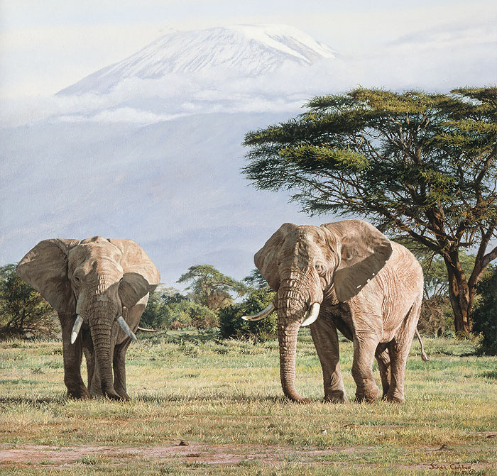 Simon Combes African Ancients Elephants