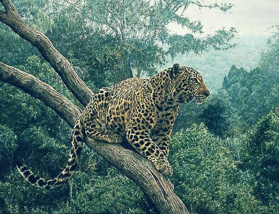 Simon Combes Solitary Hunter Leopard