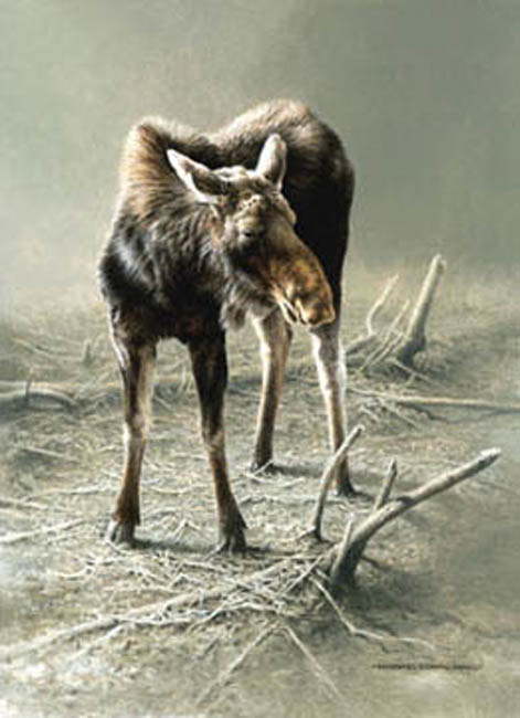 Michael Dumas The Moose Yearling