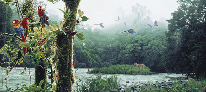 Rod Frederick Rainforest Rendezvous