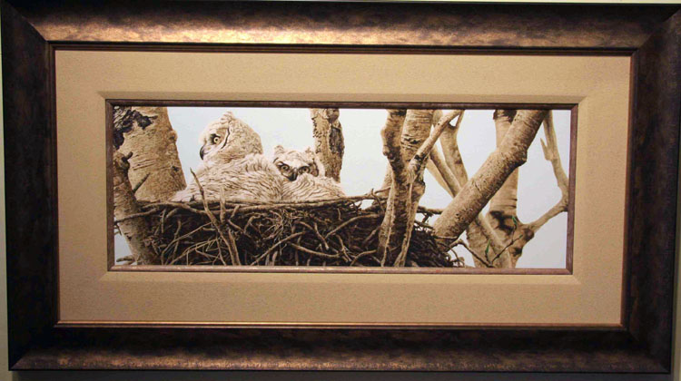 Darren Haley Aspen Buds Great Horned owls Framed