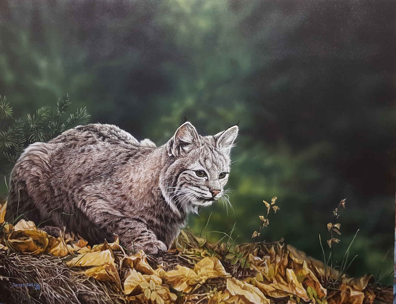 Darren Haley The Stalk Bobcat