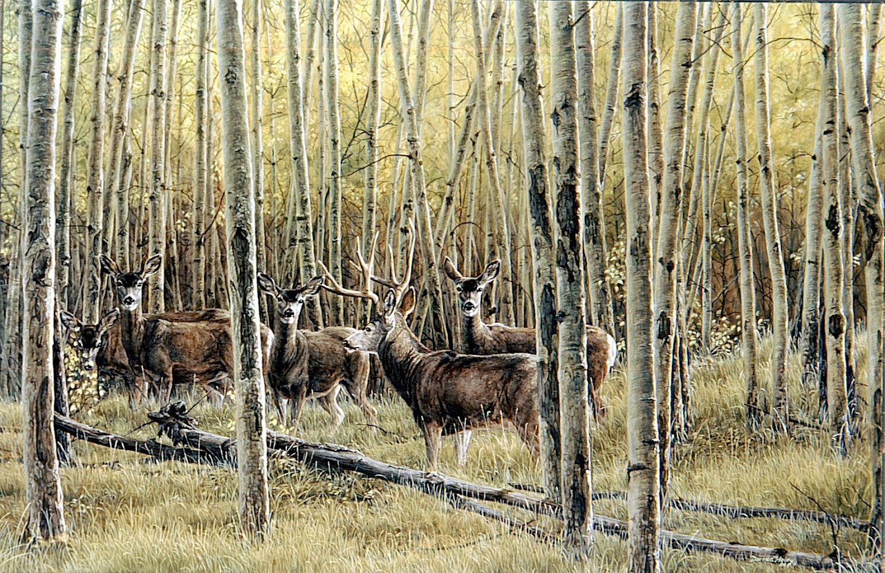 Darren Haley Mule Deer In Aspens