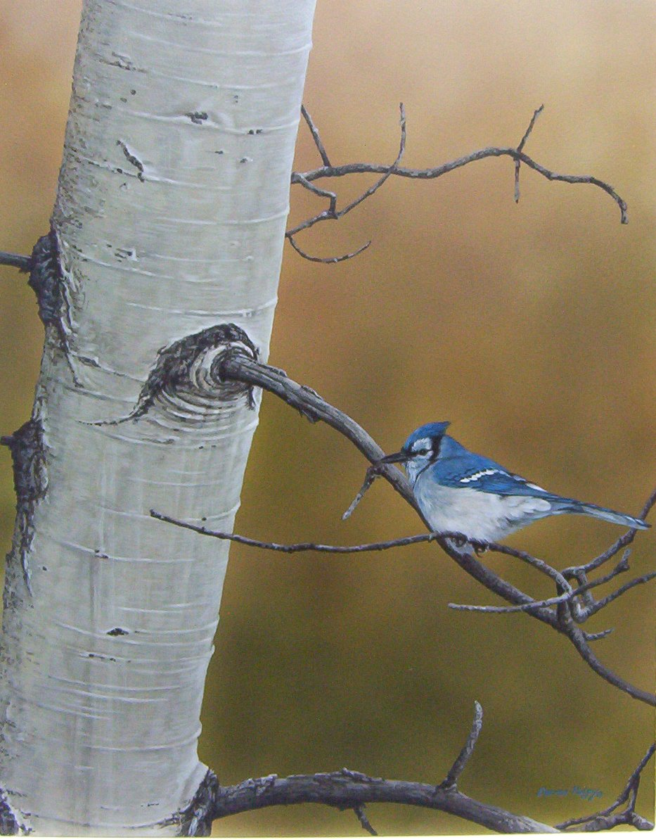 Darren Haley - Bragg Creek Blue Jay