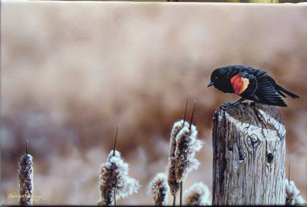 Darren haley Bprder patrol Red Winged Blackbird