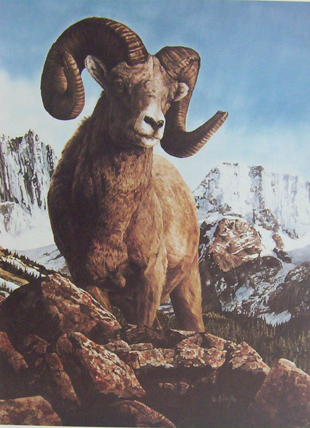 Bill Holder Bighorn Sheep