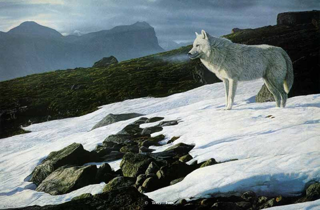 Terry Isaac Arctic Light Wolf